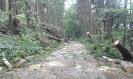 Kalamita 11.8. 2017 - Cesta na Vyhnánov